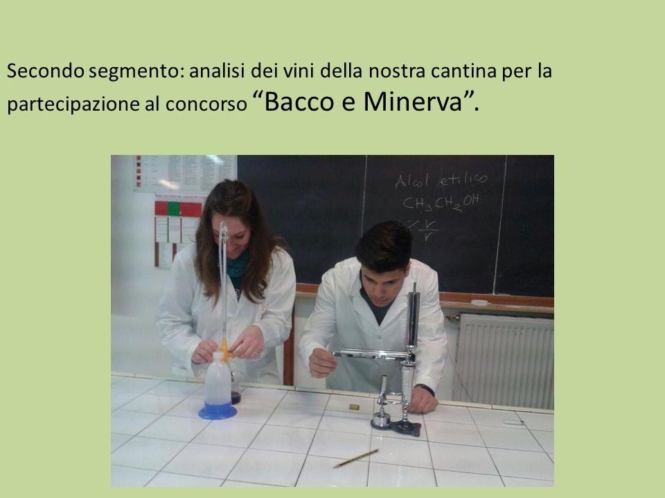 Secondo segmento: analisi dei vini della nostra cantina per la partecipazione al concorso Bacco e Minerva .