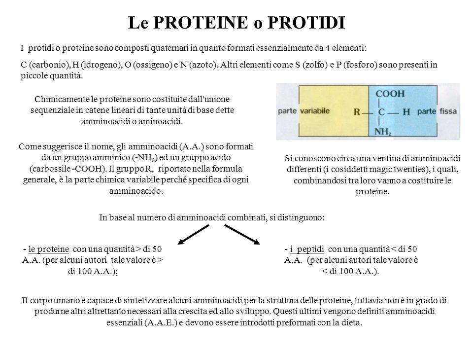 Le PROTEINE o PROTIDI I protidi o proteine sono composti quaternari in quanto formati essenzialmente da 4 elementi: