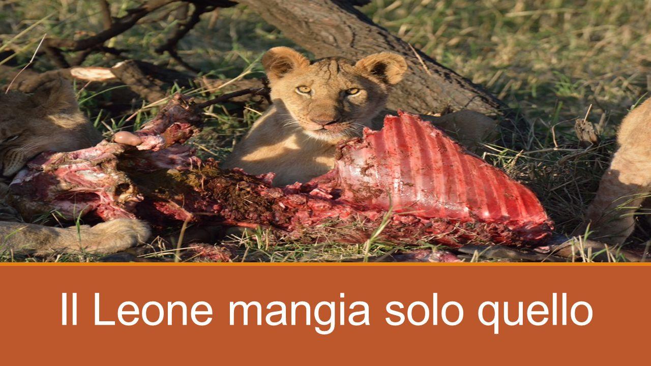 Il Leone mangia solo quello