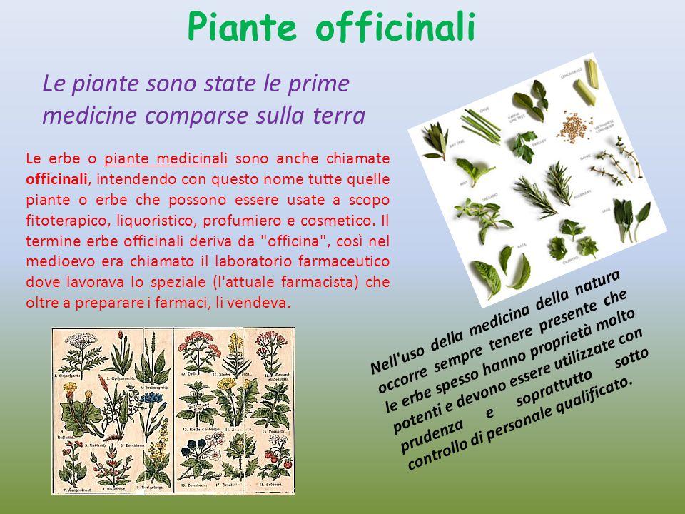 Piante officinali Le piante sono state le prime medicine comparse sulla terra.