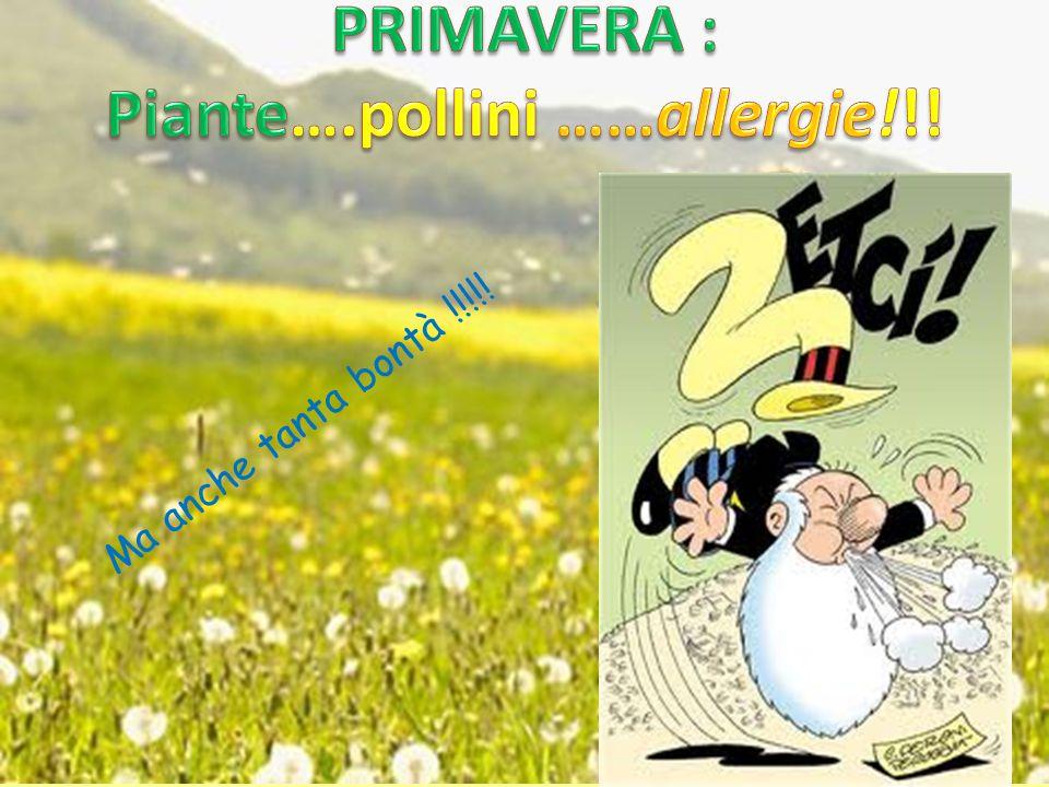 Piante….pollini ……allergie!!!