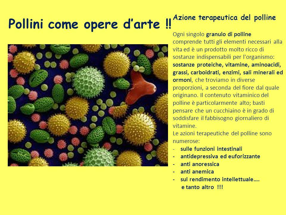 Pollini come opere d'arte !!