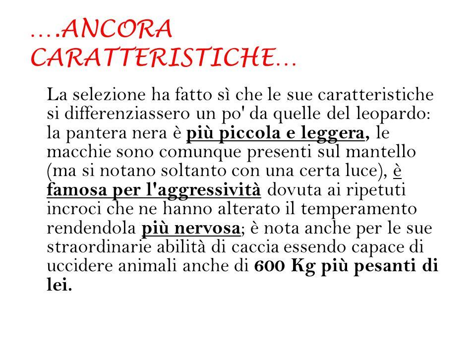 ….ANCORA CARATTERISTICHE…