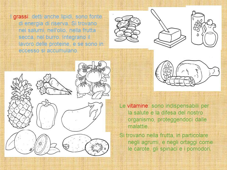I grassi: detti anche lipidi, sono fonte di energia di riserva