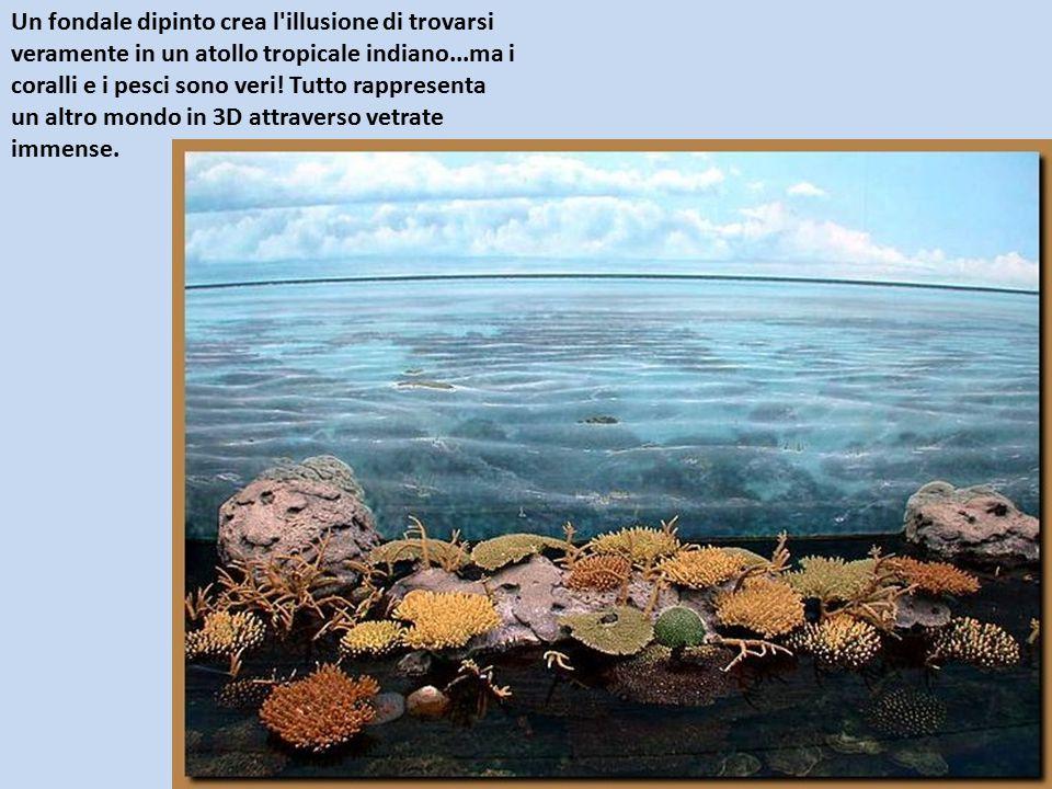 Un fondale dipinto crea l illusione di trovarsi veramente in un atollo tropicale indiano...ma i coralli e i pesci sono veri.