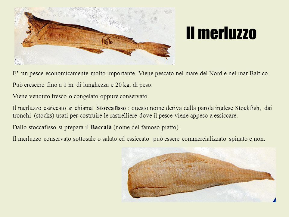Il merluzzo E' un pesce economicamente molto importante. Viene pescato nel mare del Nord e nel mar Baltico.