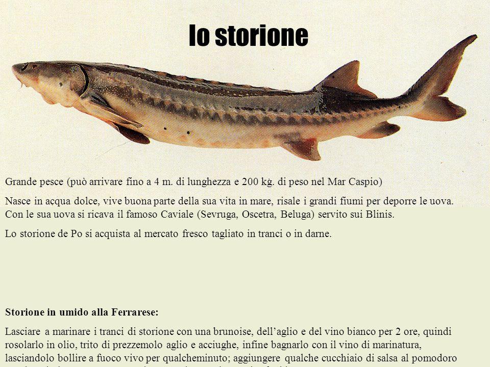 lo storione Grande pesce (può arrivare fino a 4 m. di lunghezza e 200 kg. di peso nel Mar Caspio)