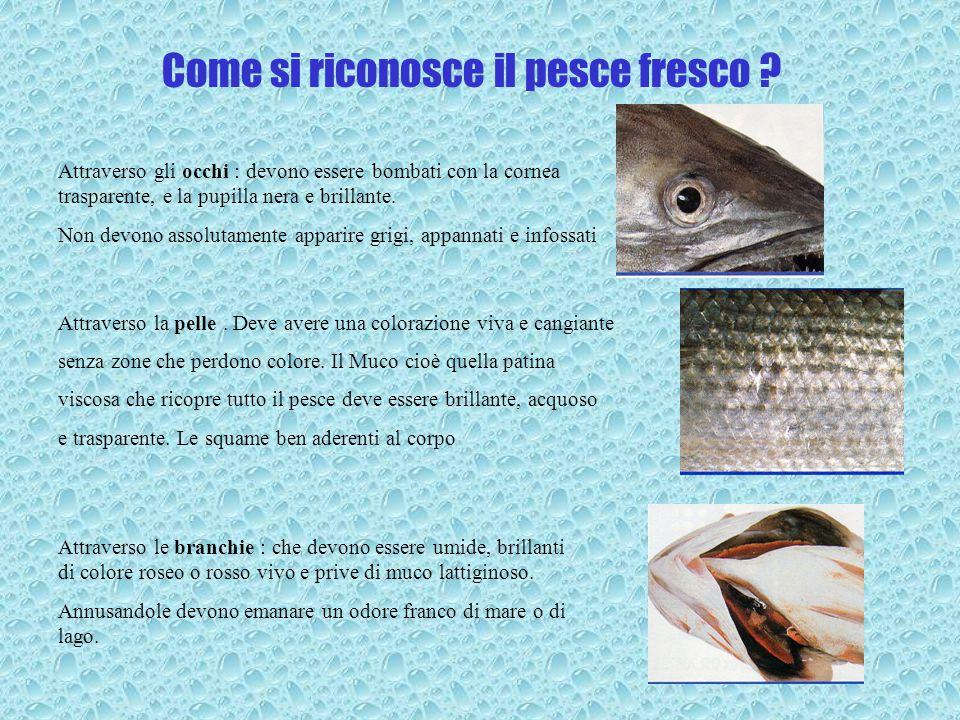 Come si riconosce il pesce fresco