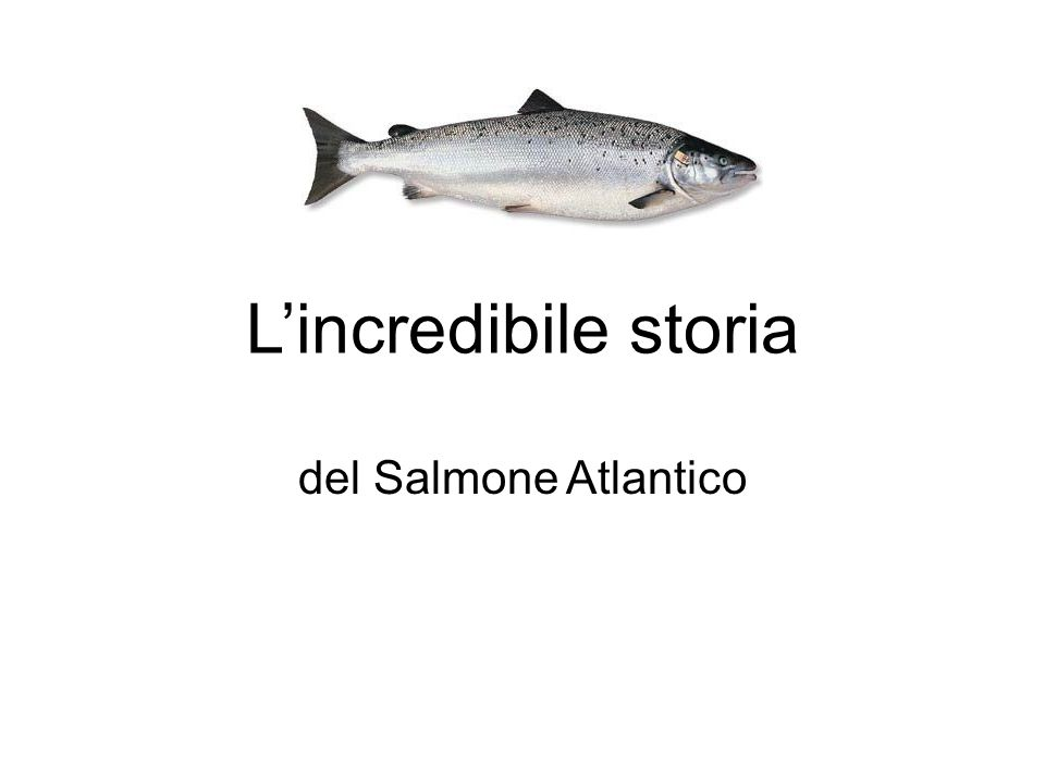 L'incredibile storia del Salmone Atlantico