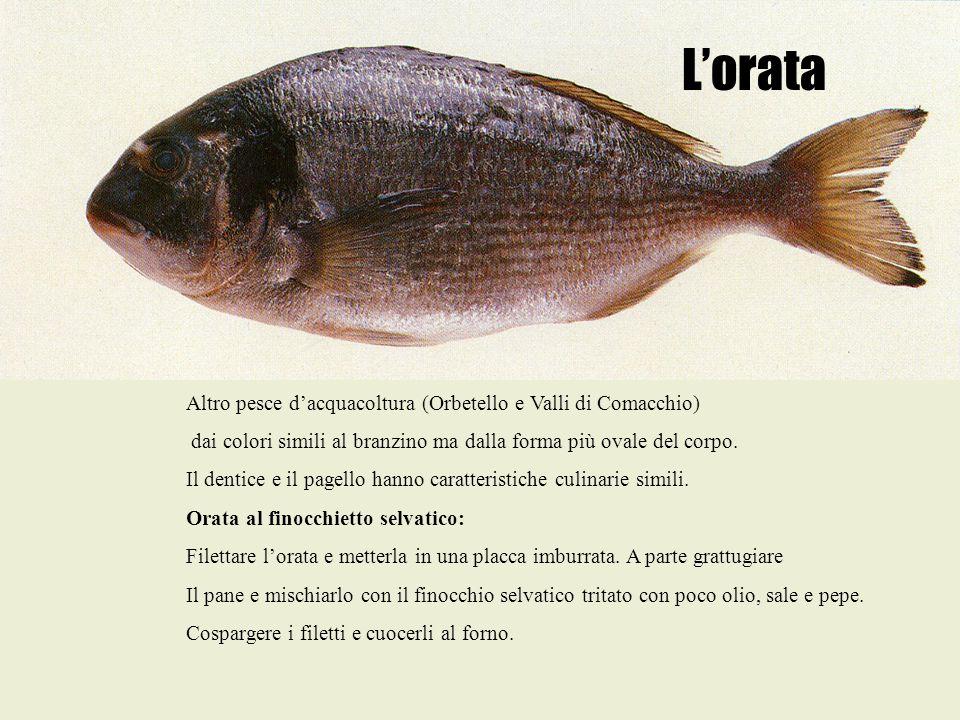 L'orata Altro pesce d'acquacoltura (Orbetello e Valli di Comacchio)