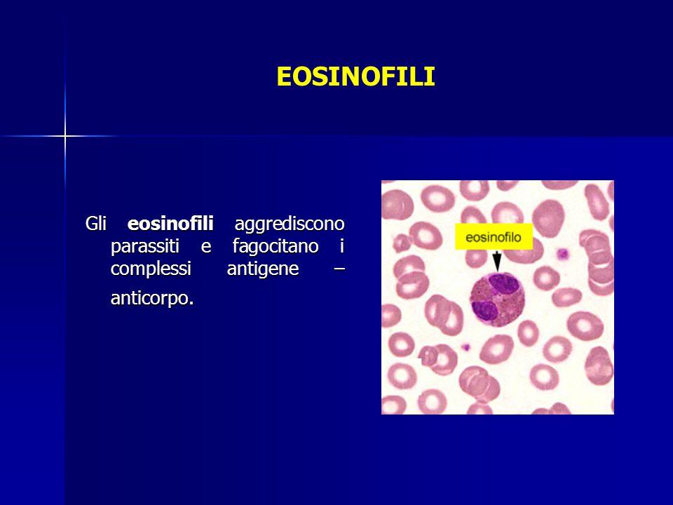 EOSINOFILI Gli eosinofili aggrediscono parassiti e fagocitano i complessi antigene –anticorpo.