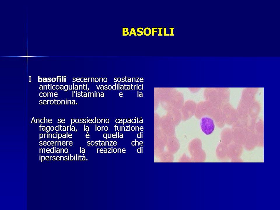 BASOFILI I basofili secernono sostanze anticoagulanti, vasodilatatrici come l istamina e la serotonina.