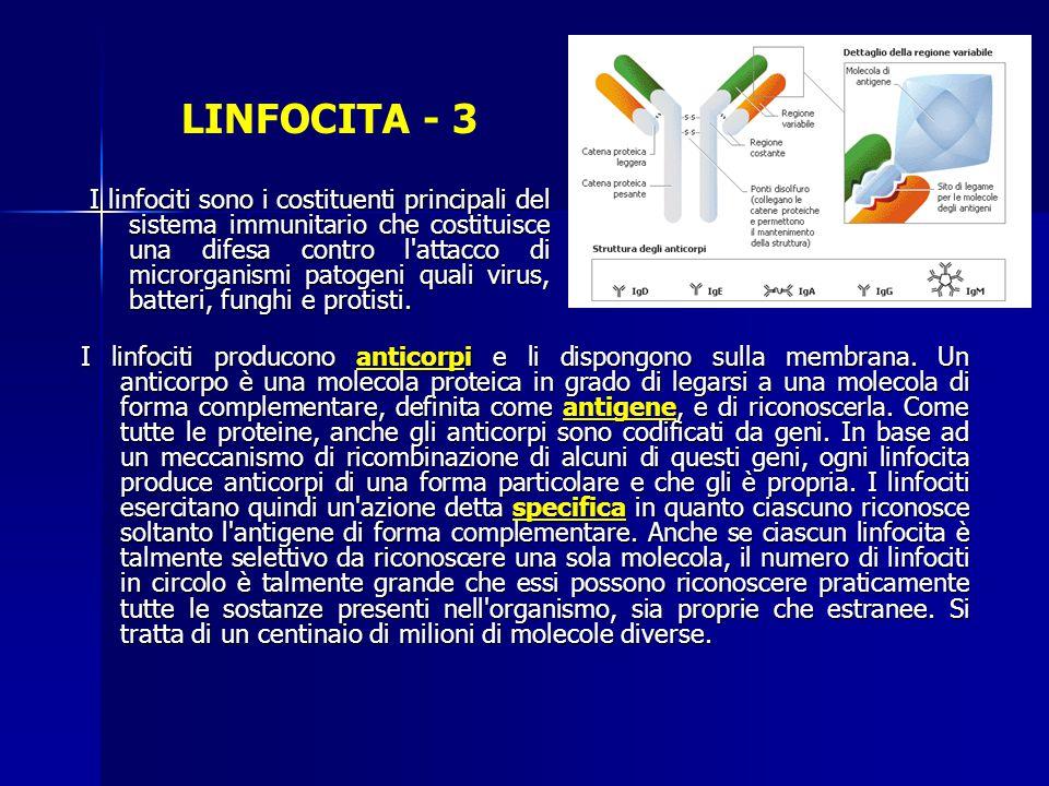LINFOCITA - 3