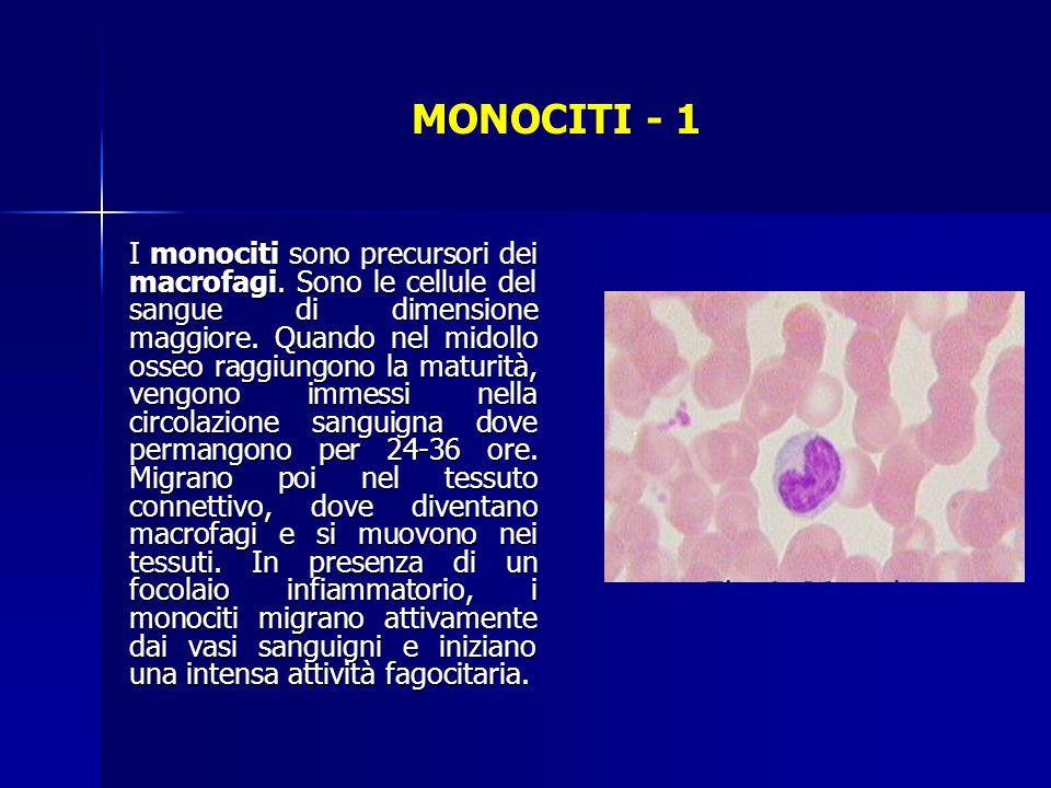 MONOCITI - 1