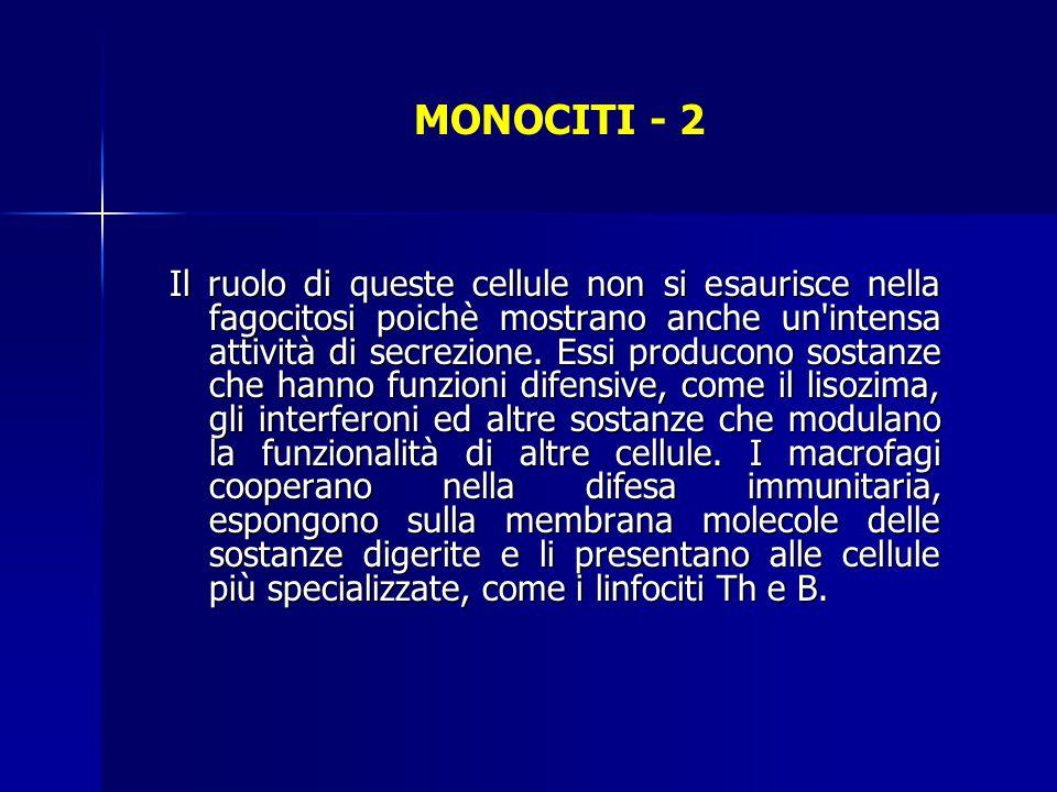 MONOCITI - 2