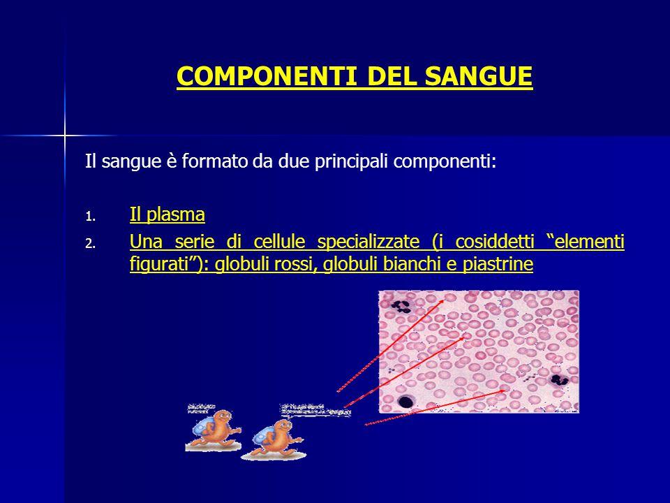 COMPONENTI DEL SANGUE Il sangue è formato da due principali componenti: Il plasma.