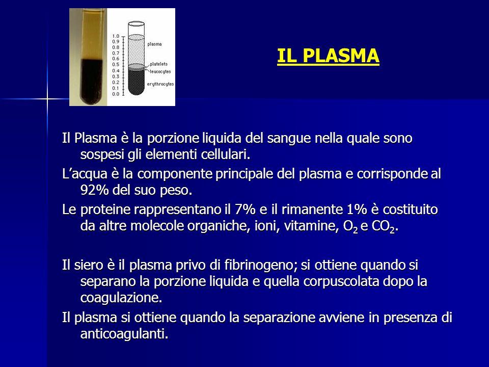 IL PLASMA Il Plasma è la porzione liquida del sangue nella quale sono sospesi gli elementi cellulari.