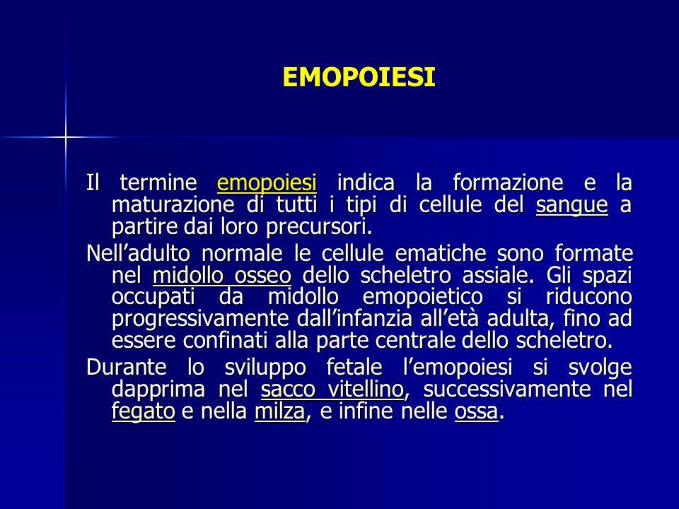 EMOPOIESI Il termine emopoiesi indica la formazione e la maturazione di tutti i tipi di cellule del sangue a partire dai loro precursori.