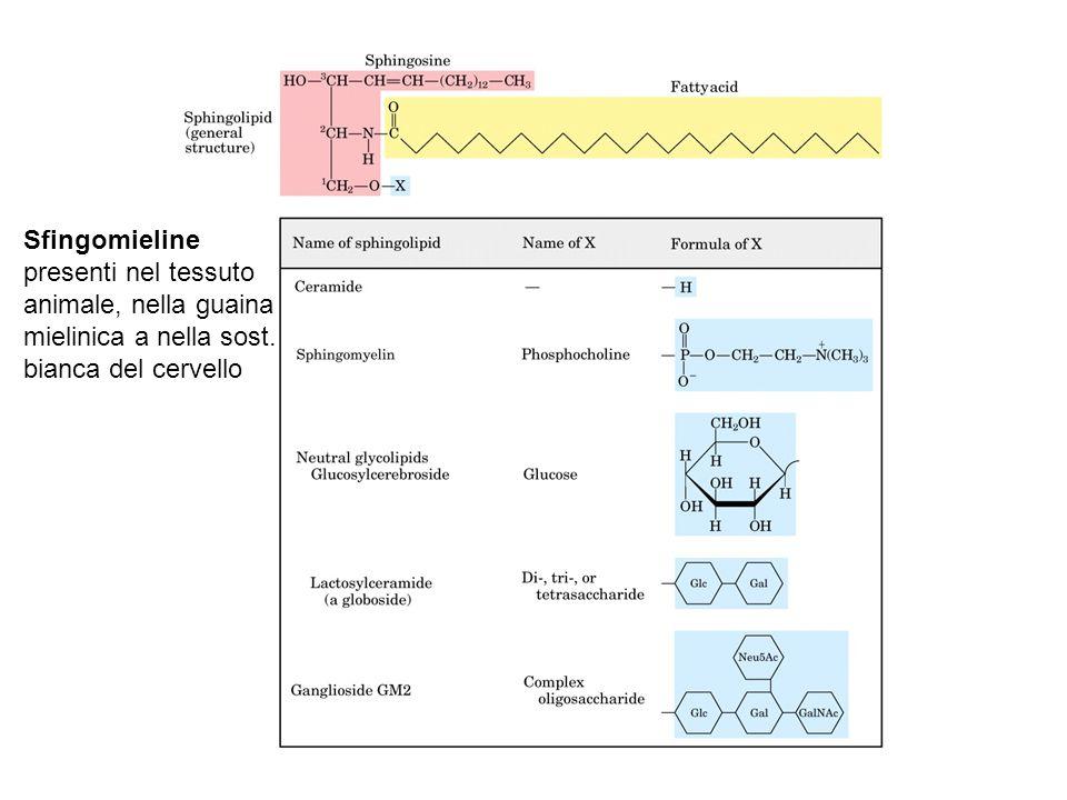 Sfingomieline presenti nel tessuto animale, nella guaina mielinica a nella sost. bianca del cervello