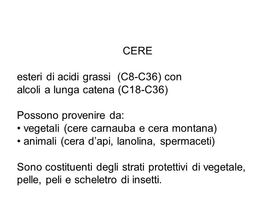 CERE esteri di acidi grassi (C8-C36) con. alcoli a lunga catena (C18-C36) Possono provenire da: vegetali (cere carnauba e cera montana)