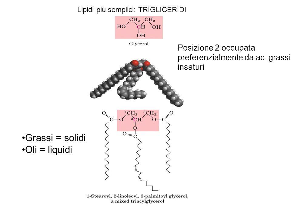 Grassi = solidi Oli = liquidi