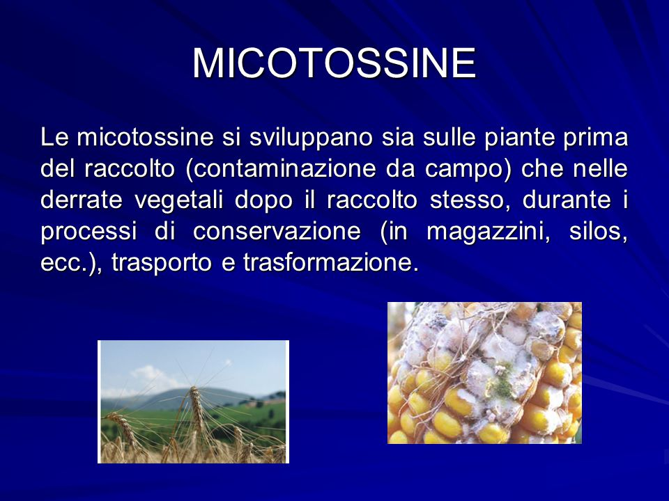 MICOTOSSINE