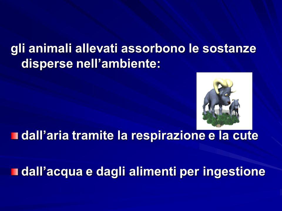 gli animali allevati assorbono le sostanze disperse nell'ambiente: