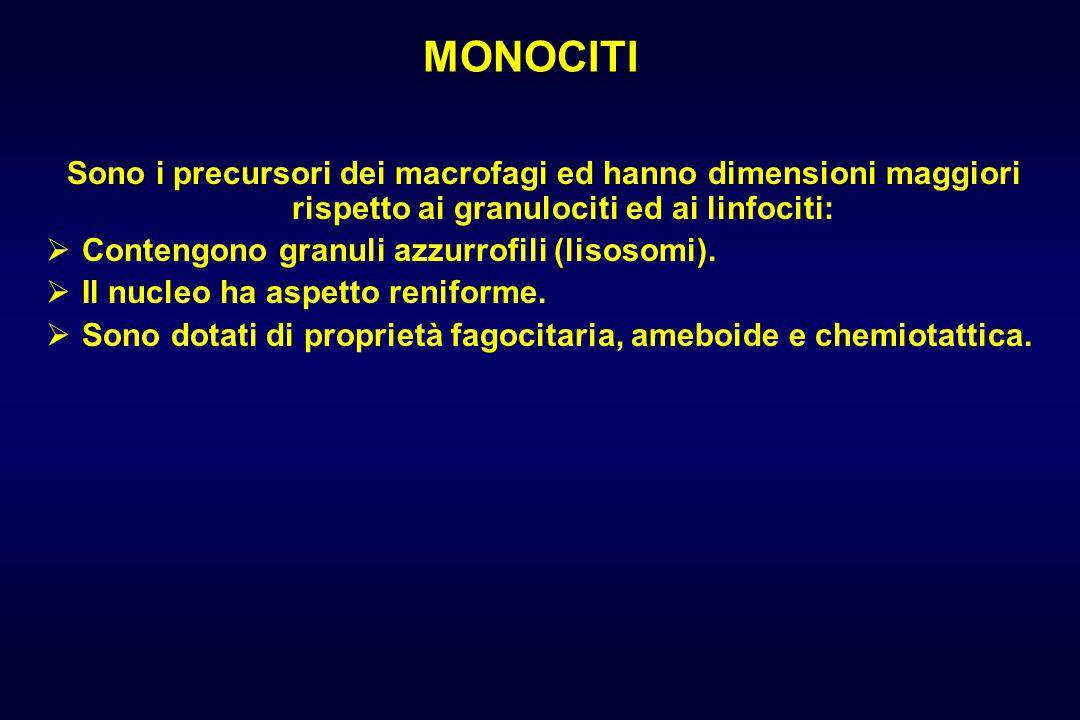 MONOCITI Sono i precursori dei macrofagi ed hanno dimensioni maggiori rispetto ai granulociti ed ai linfociti: