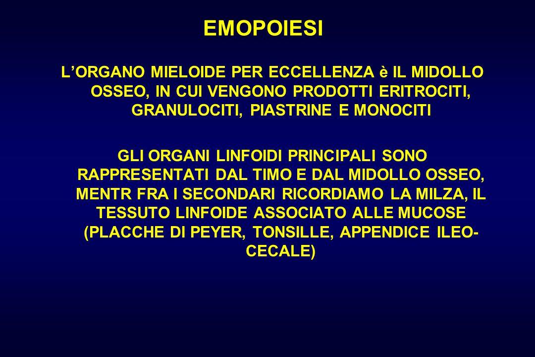 EMOPOIESI L'ORGANO MIELOIDE PER ECCELLENZA è IL MIDOLLO OSSEO, IN CUI VENGONO PRODOTTI ERITROCITI, GRANULOCITI, PIASTRINE E MONOCITI.