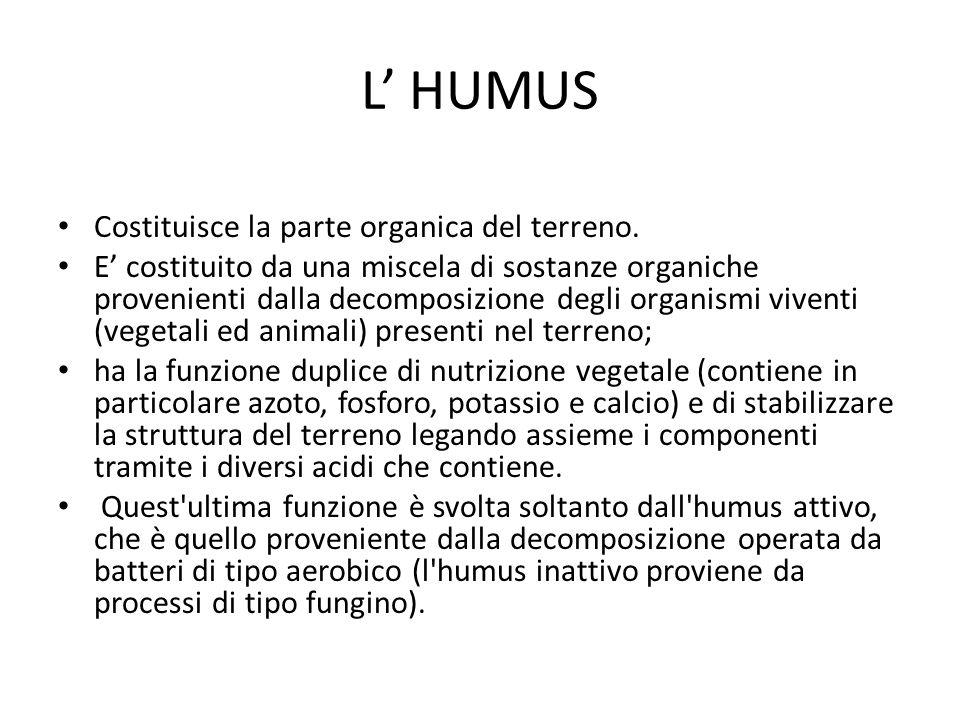 L' HUMUS Costituisce la parte organica del terreno.