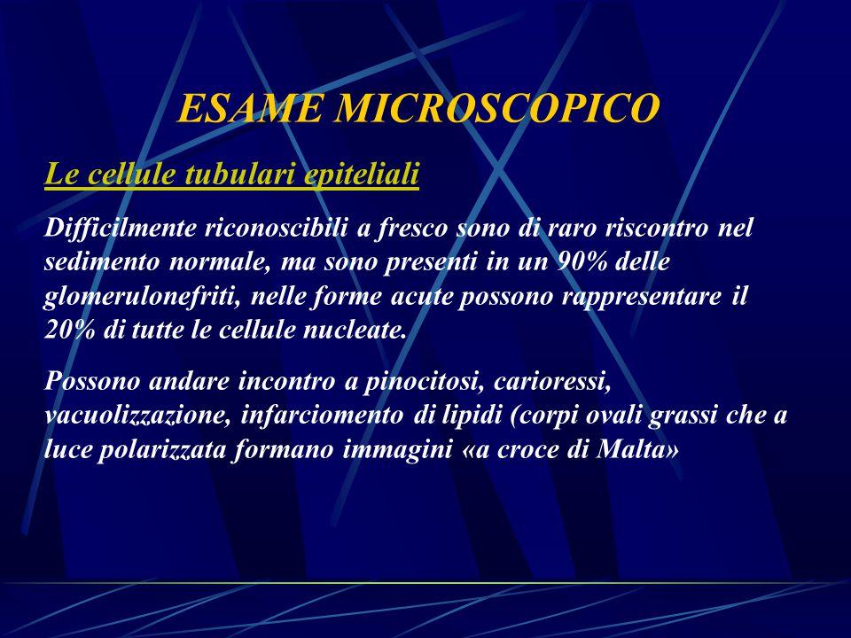 ESAME MICROSCOPICO Le cellule tubulari epiteliali