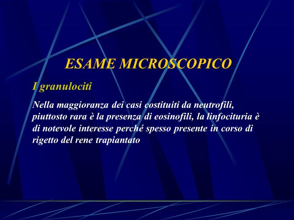 ESAME MICROSCOPICO I granulociti