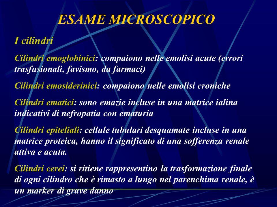 ESAME MICROSCOPICO I cilindri