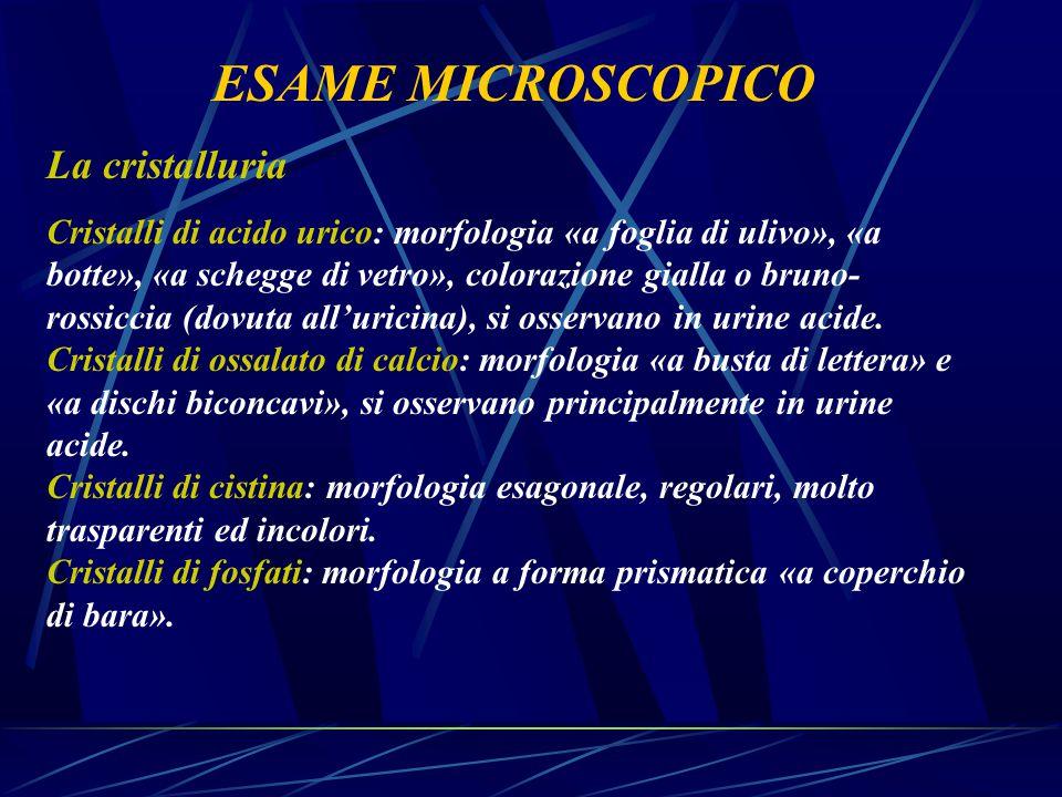 ESAME MICROSCOPICO La cristalluria
