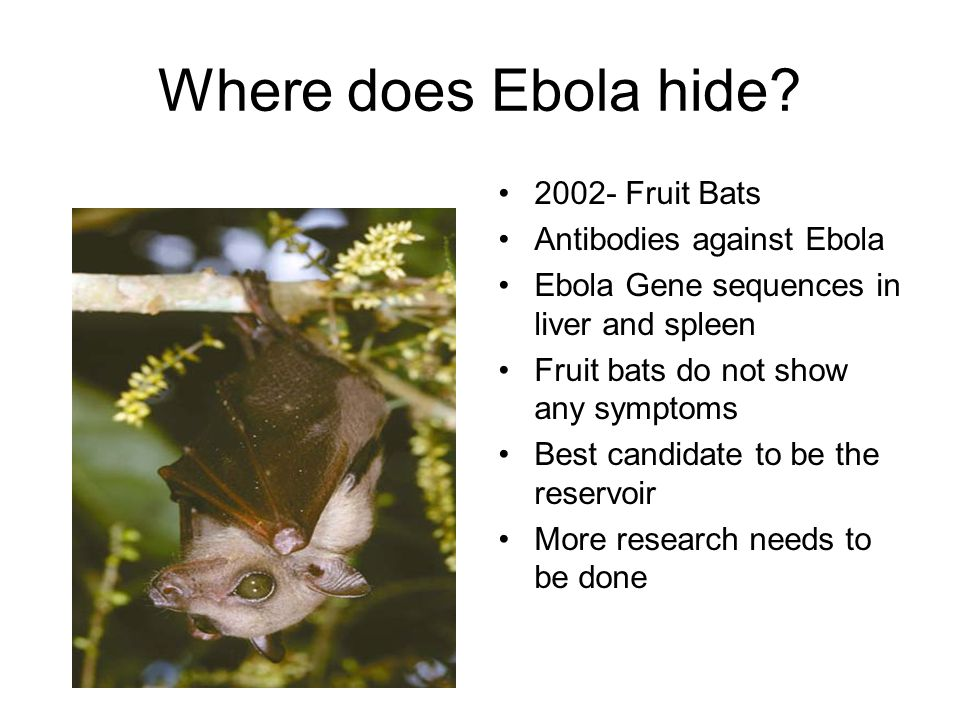 Where does Ebola hide 2002- Fruit Bats Antibodies against Ebola