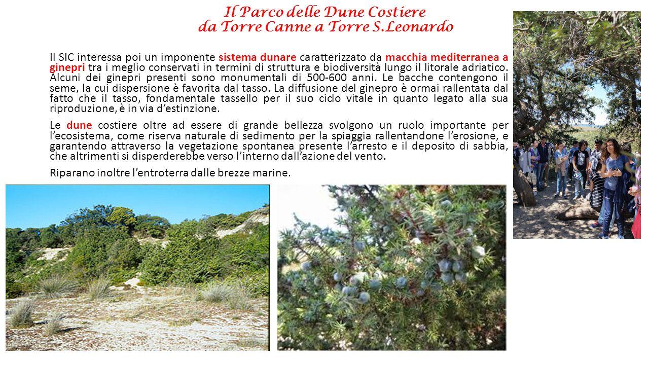 Il Parco delle Dune Costiere da Torre Canne a Torre S.Leonardo