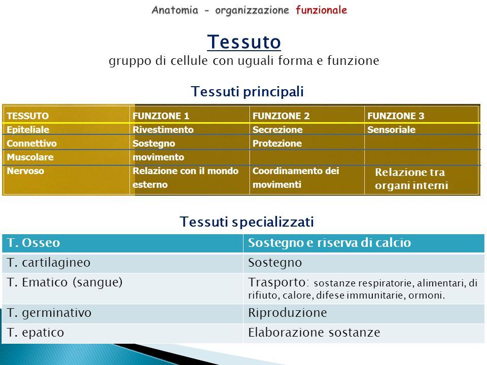 Anatomia - organizzazione funzionale