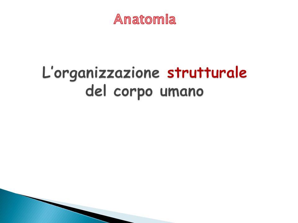 L'organizzazione strutturale del corpo umano