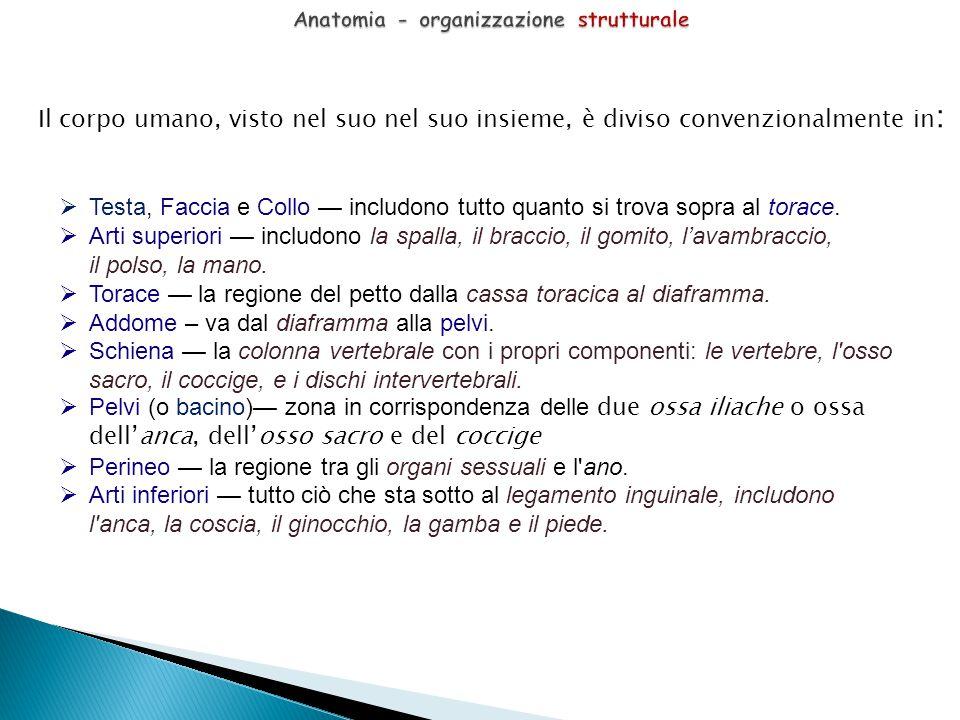 Anatomia - organizzazione strutturale