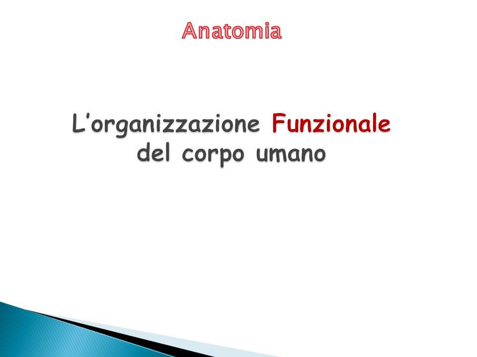 L'organizzazione Funzionale del corpo umano