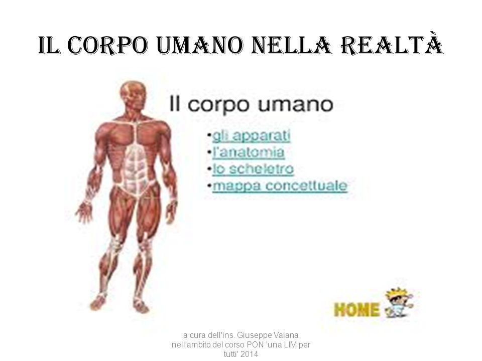 Il corpo umano nella realtà