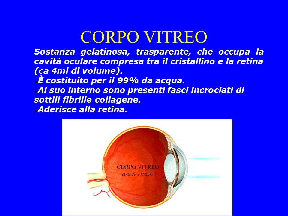 CORPO VITREO Sostanza gelatinosa, trasparente, che occupa la cavità oculare compresa tra il cristallino e la retina (ca 4ml di volume).