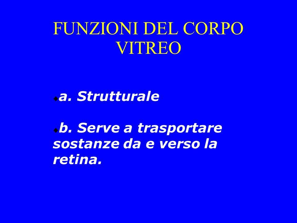 FUNZIONI DEL CORPO VITREO