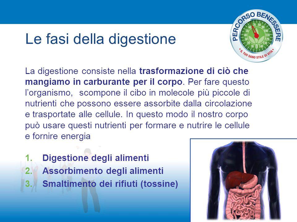 Le fasi della digestione