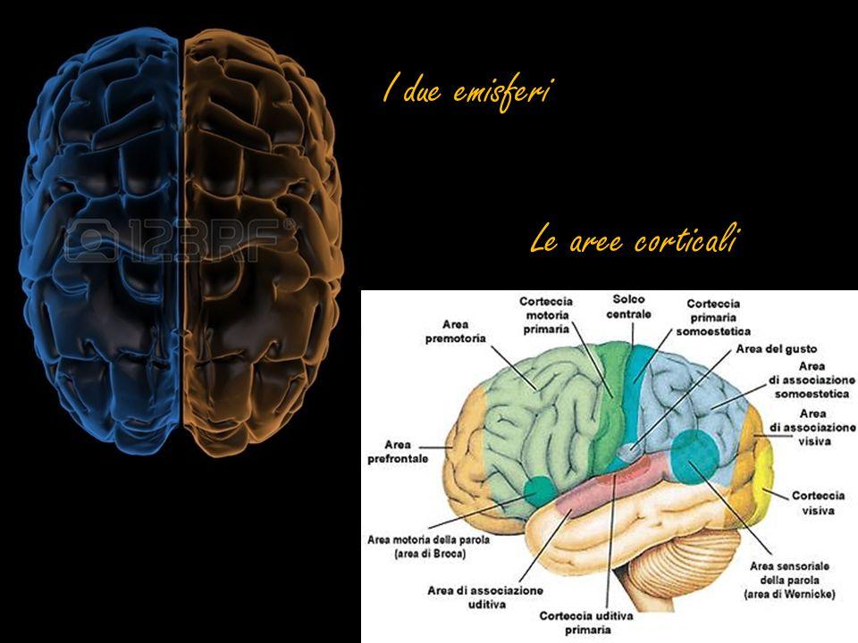 I due emisferi Le aree corticali
