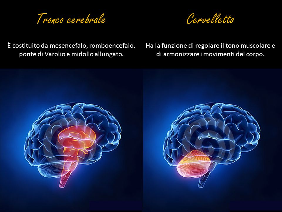 Tronco cerebrale Cervelletto