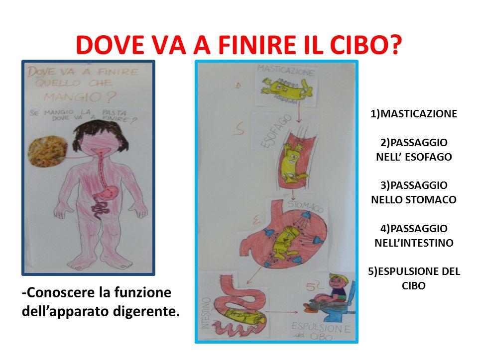 DOVE VA A FINIRE IL CIBO 1)MASTICAZIONE. 2)PASSAGGIO NELL' ESOFAGO. 3)PASSAGGIO NELLO STOMACO.