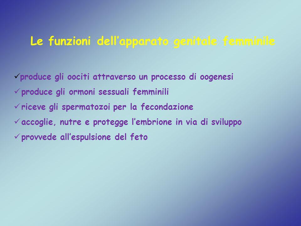 Le funzioni dell'apparato genitale femminile