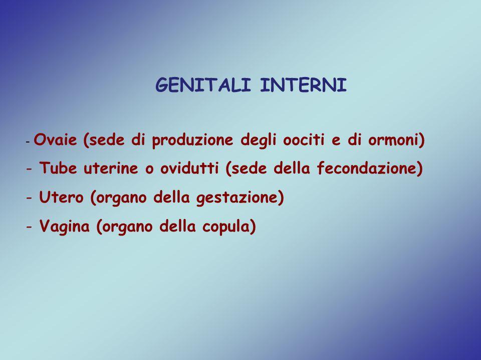 GENITALI INTERNI Tube uterine o ovidutti (sede della fecondazione)