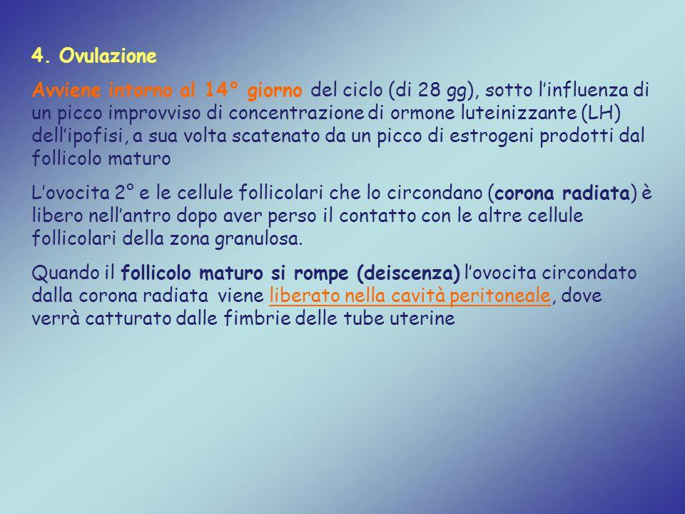 4. Ovulazione